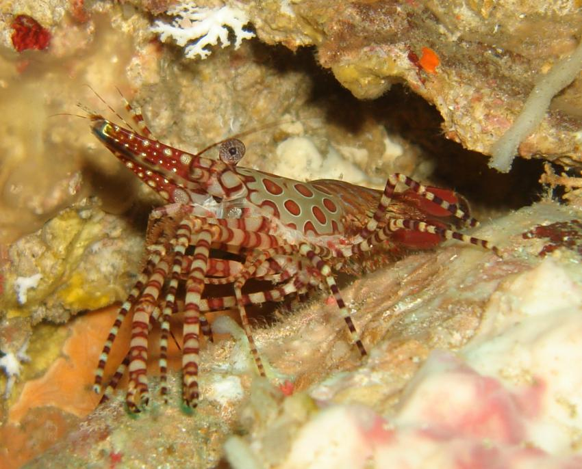 Extra Divers Myanmar, Western Rocky Island,südliches Mergui Archipel,Myanmar