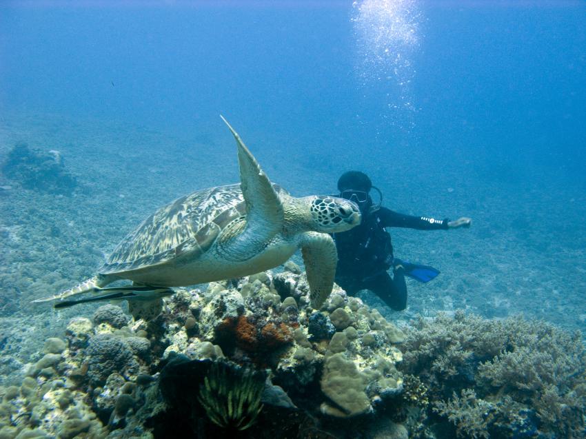 Gili Air, Gili Island,Lombok,Indonesien,Meeresschildkröte,Taucher
