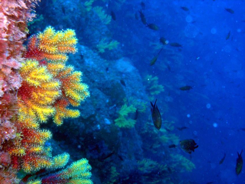 Tamariu bei Stolli, Tamariu,Costa Brava,Spanien
