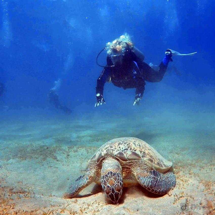Turtle Power, Extra Divers - Ghalib, Port Ghalib, Ägypten, El Quseir bis Port Ghalib