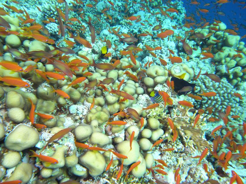 Tauchsafari Südtour, St.Johnes,Elphinestone,Ägypten
