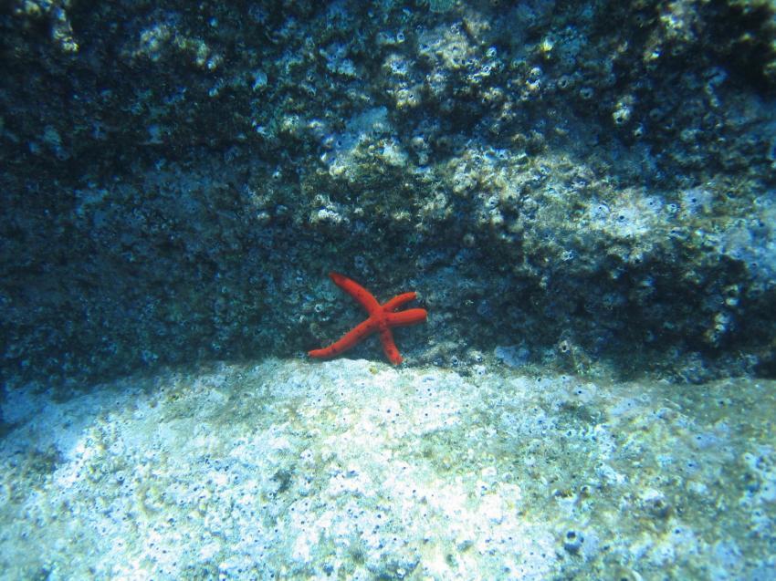 Manta Diving Center Canico, Canico,Portugal