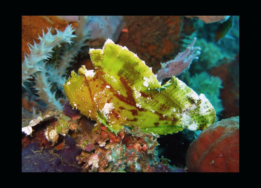 Unterwegs mit den Gangga Divers (Teil 2)