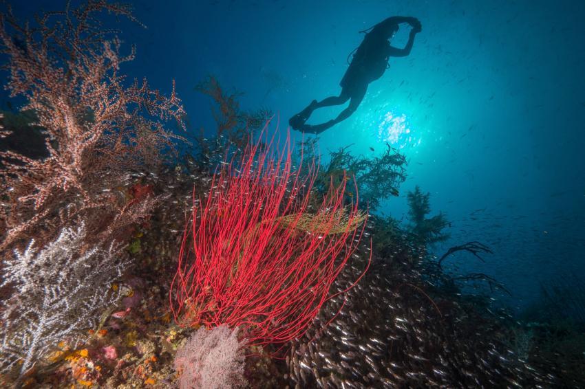 Unterwasserlandschaft mit Taucher